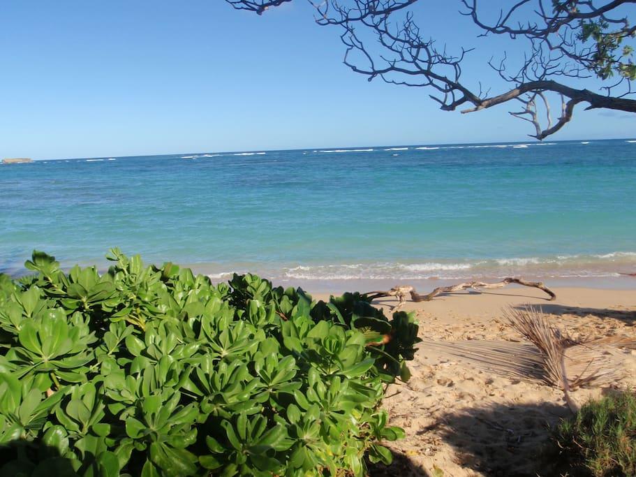 pristine beach in front of unit