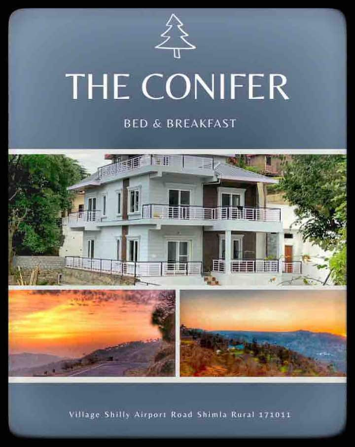 The Conifer