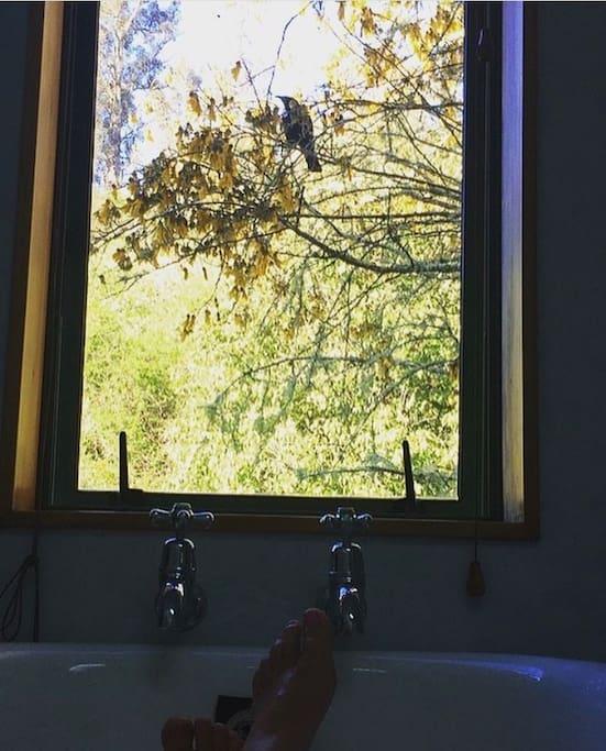 Claw foot bath with native bush views
