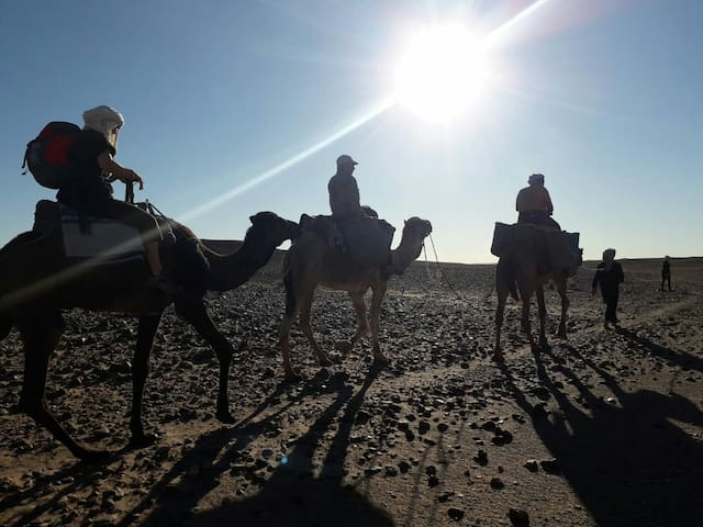 Camp and camel trek in the desert : Sahara Peace