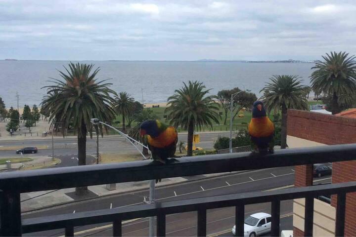 Meeting the locals rainbow lorikeets