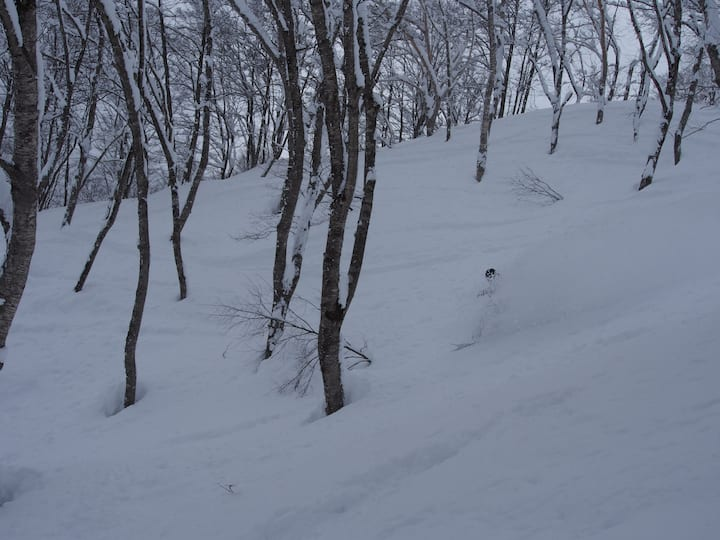 Nori's Sharehouse Hakuba 4 シングルルーム
