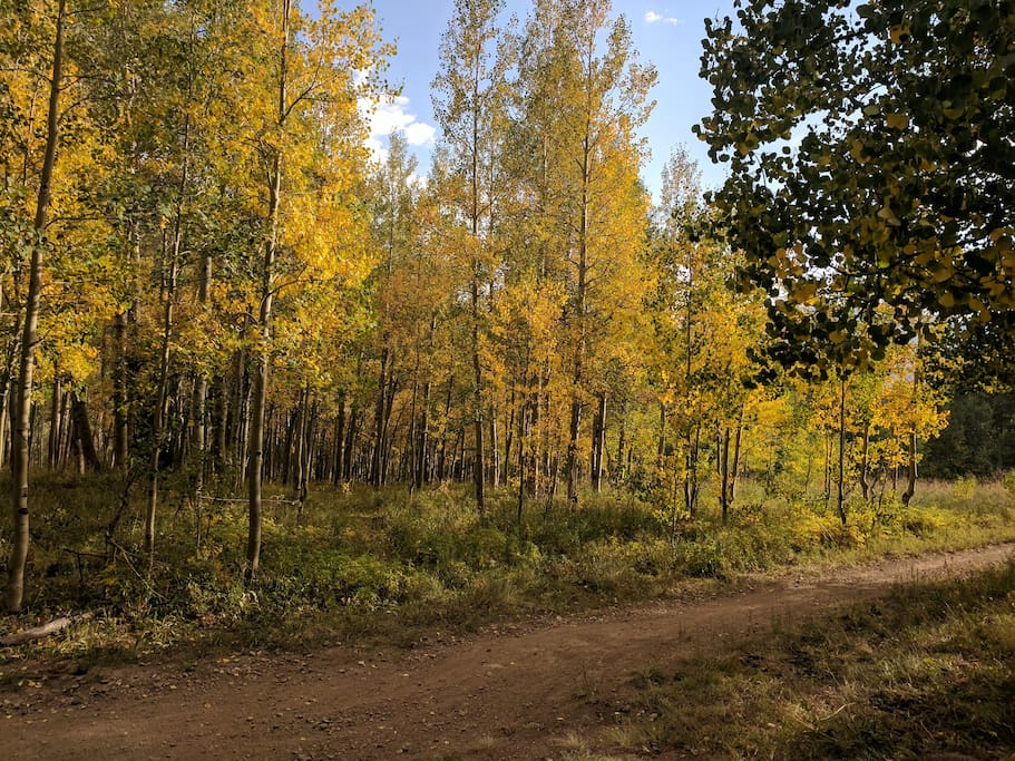 The aspen leaves are turning! This was taken September 2nd, 2017.