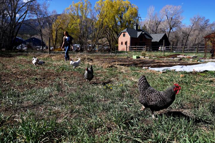 Farm chickens!