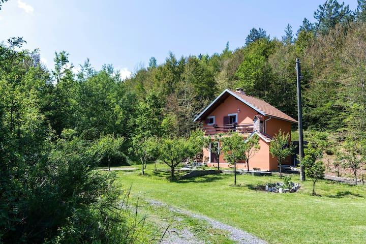 Forest Escape Guest house