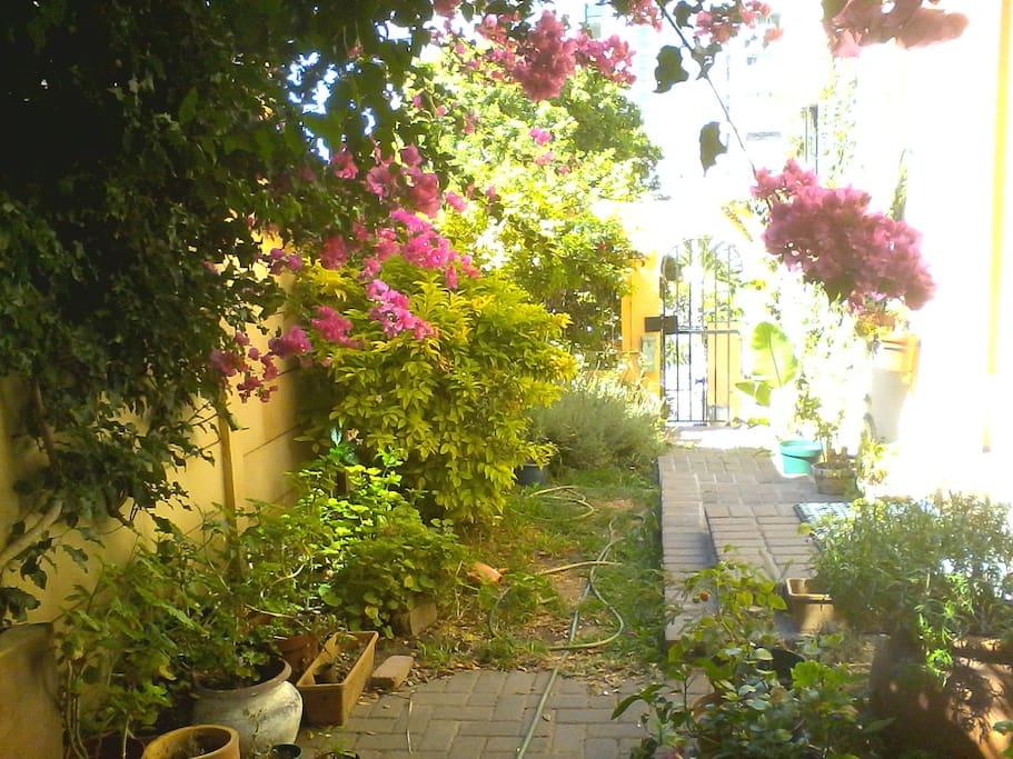 Lush garden setting