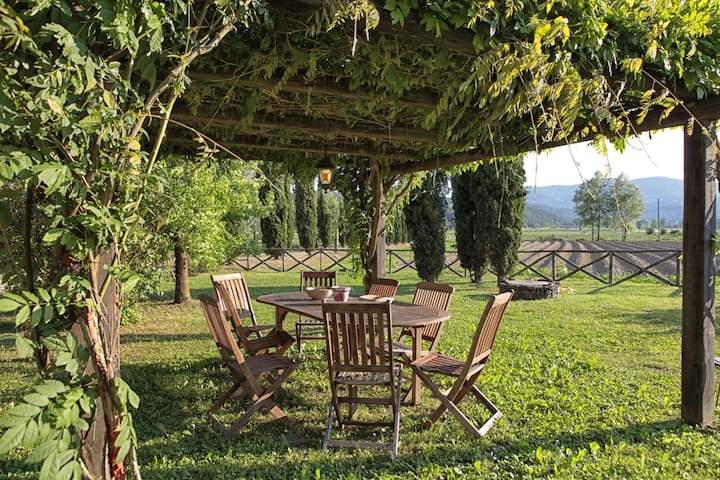 """The pergola is near the pool and great for eating """"al fresco"""" under."""