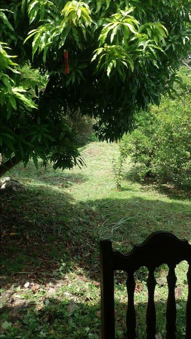 amplio patio..mucho verdor, árbol de.mango y limones..