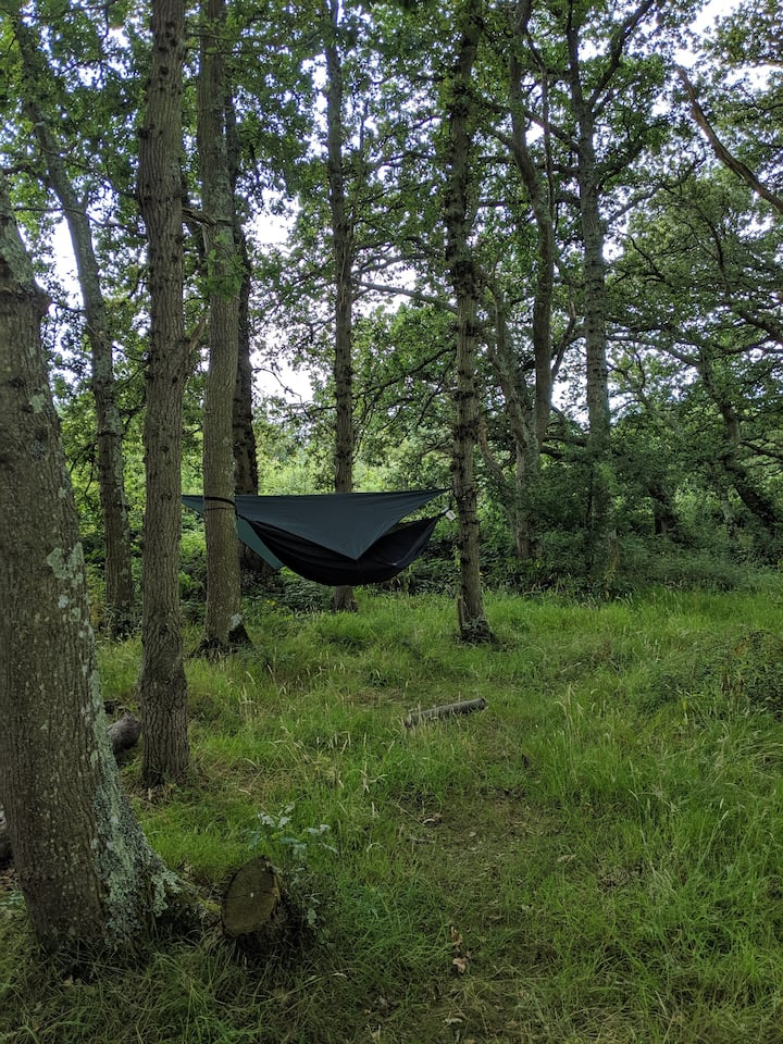 Hire-a-hammock on the Isle of Wight at Camp Wight