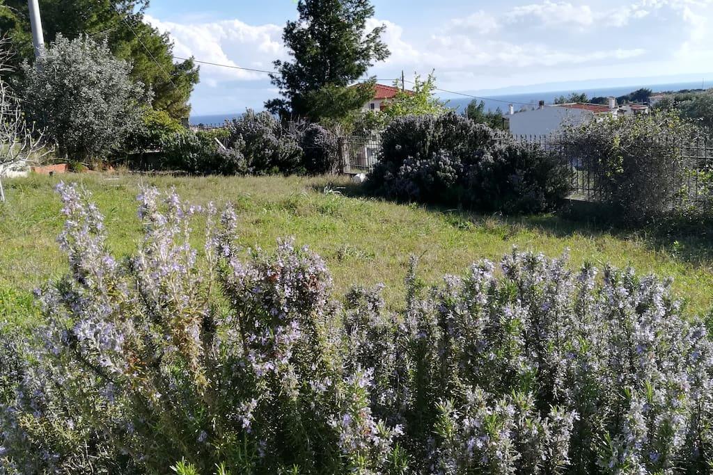 Ο κήπος/ The garden