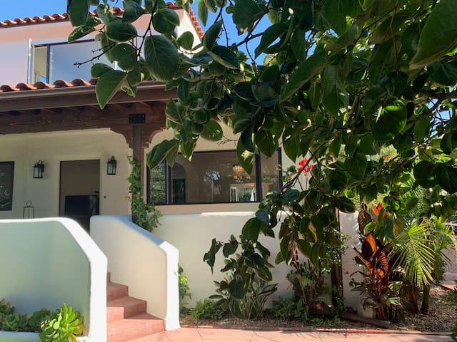 come on in and wander thru to the back. Linger in the heated pool or on the lounges. Watch the birds in the fountain, Pick some guavas or lemons, or maybe even some persimmons if the season is right.