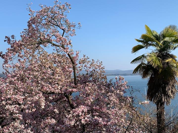 Villa first line Lake Maggiore