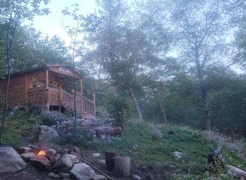 Algonquin Cabin Experience - ¡No hay vecinos!