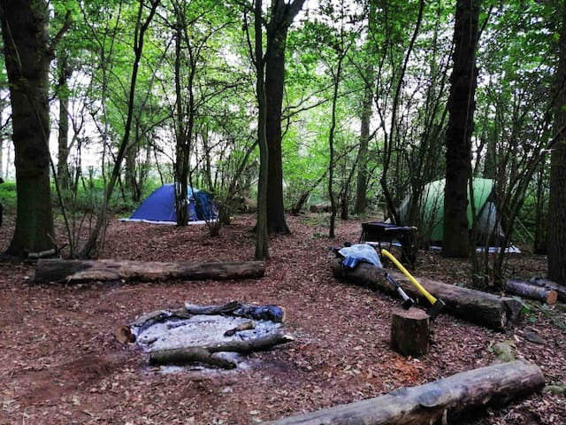 Socially distanced Woodland camping