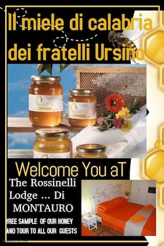 """Welcome to """"The Rossinelli Lodge"""""""