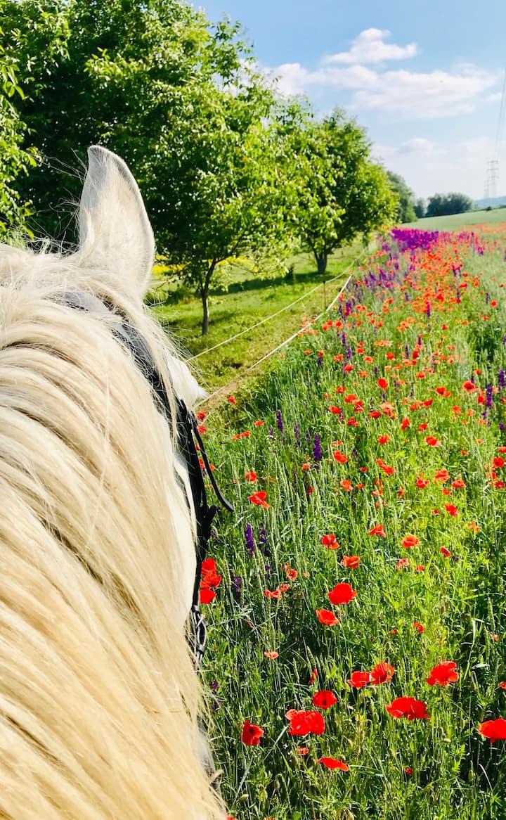 flower field in summer months:)