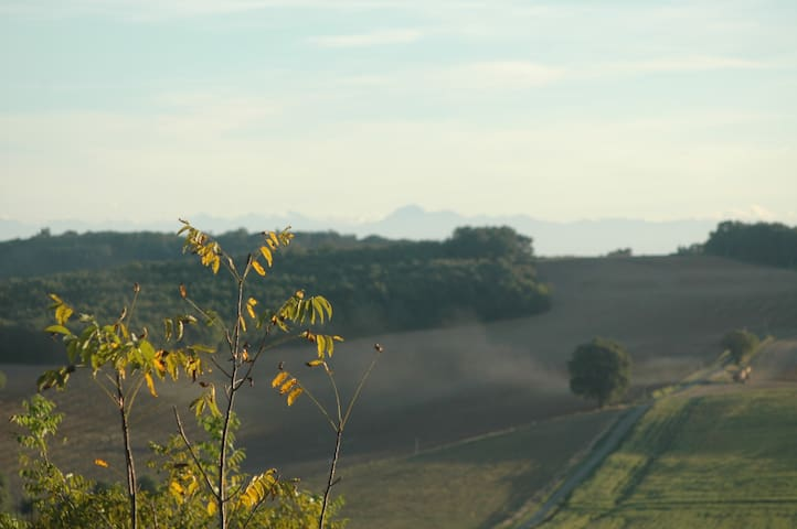Sit with a glass of wine and enjoy the view of our Walnut plantation and in the background The Pyrenees