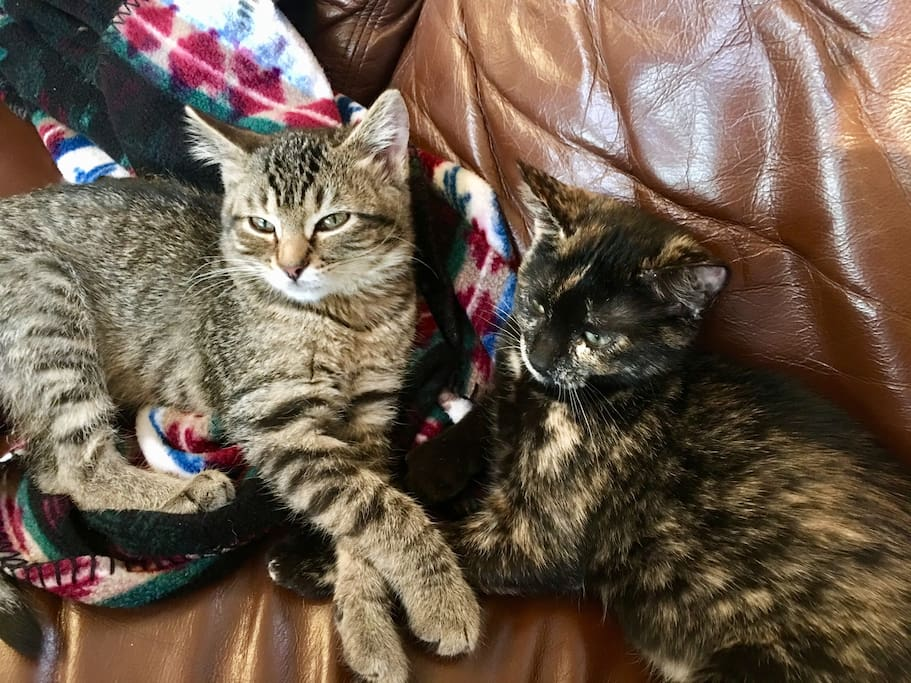 Meet the newest Members of Woodstock Ranch  Henri and Luna. They are loving Woodstock Ranch. And the Christmas Tree.