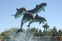 Swim with the Dolphins at the World famous Dolphin Cove. Just 10 minutes drive.