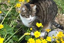 Catsu dans le jardin