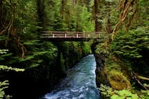 Must Do: hike to Sol Duc Falls