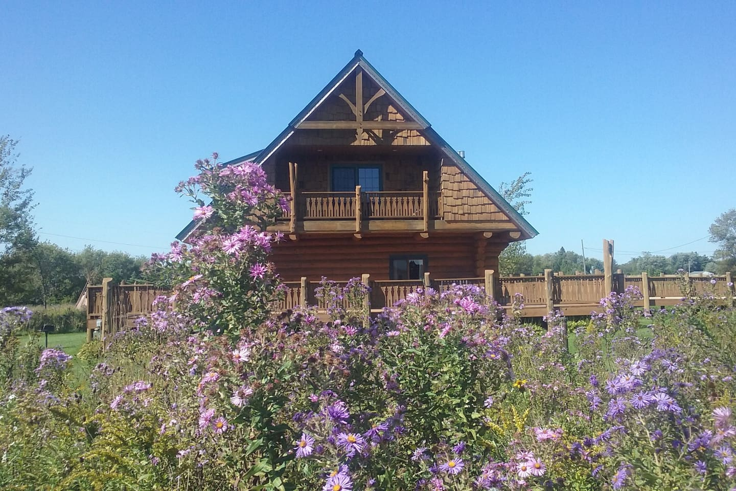 view of the cabin with fall new england asters!