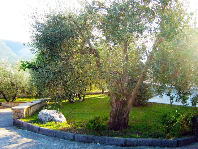 "B&B Maison Villa Vittorio ""Appartamento MIMOSA"""