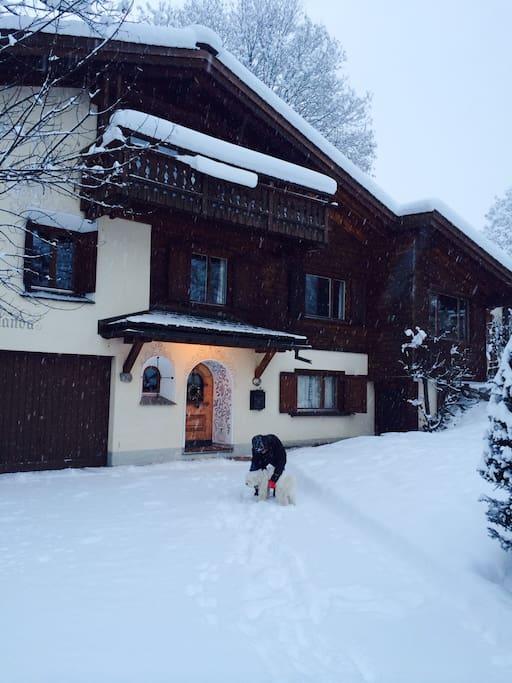 House Calanda & Bogart, our family dog, in the winter time
