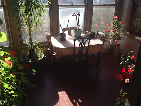 Sunroom in the winter. I I serve breakfast here in the Spring, Summer & Autumn in the Winter Josephine gets to be on the table.