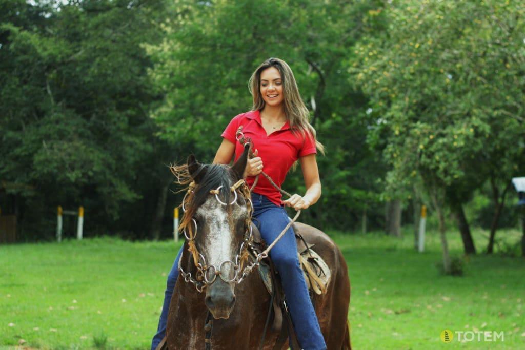 Cavalo Chitão. Conquistador dos turistas.