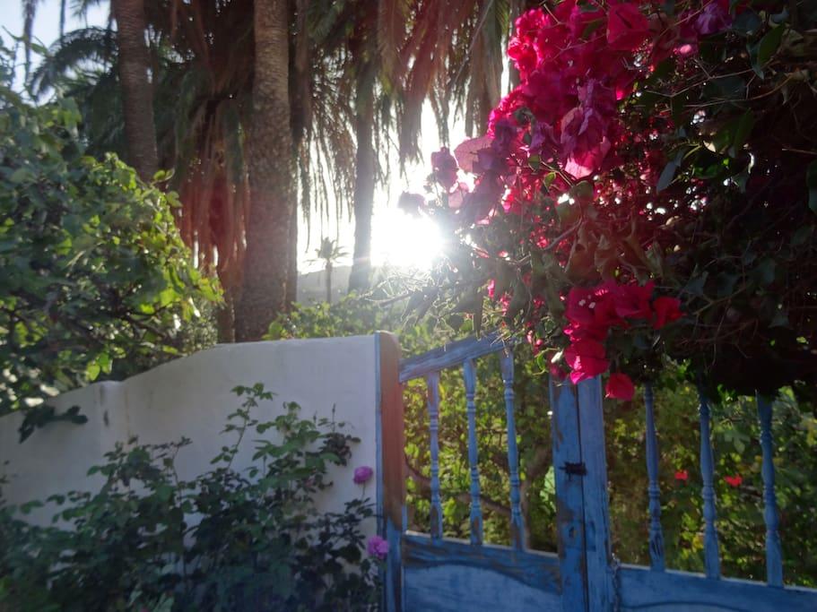 de namiddag in de tuin