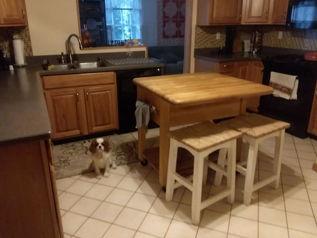 our dog again in the kitchen with gas stove guests may use with some restrictions