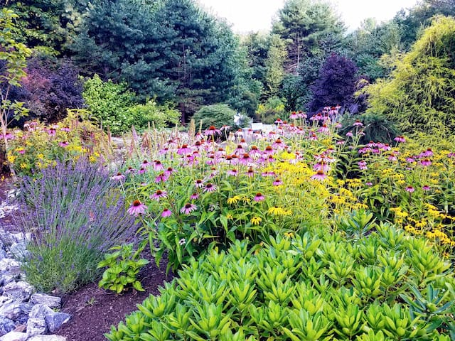 A Glimpse of Our Gardens