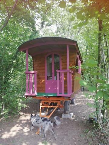 Magic Gypsy Van in the Wood