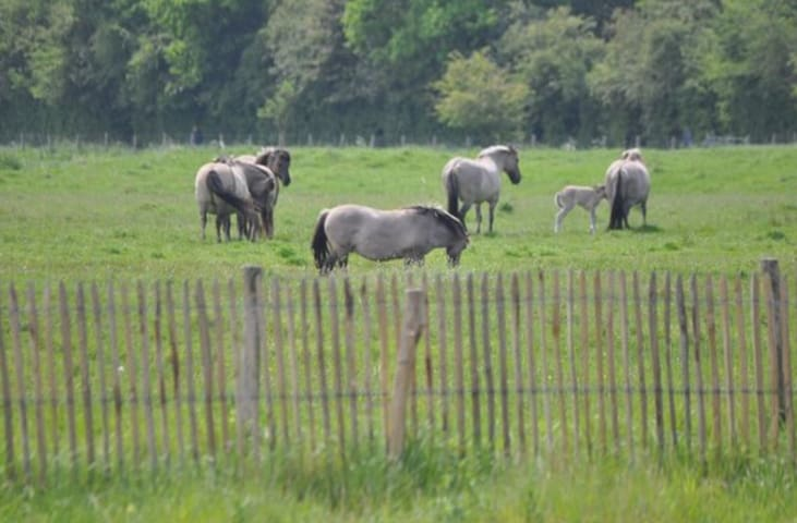 Horses near het Zwin