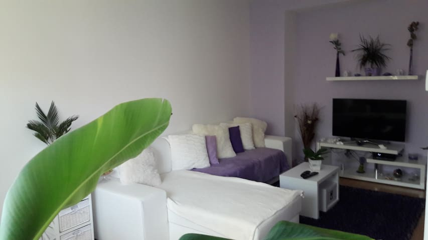 Private apartment near ZOO and city centre