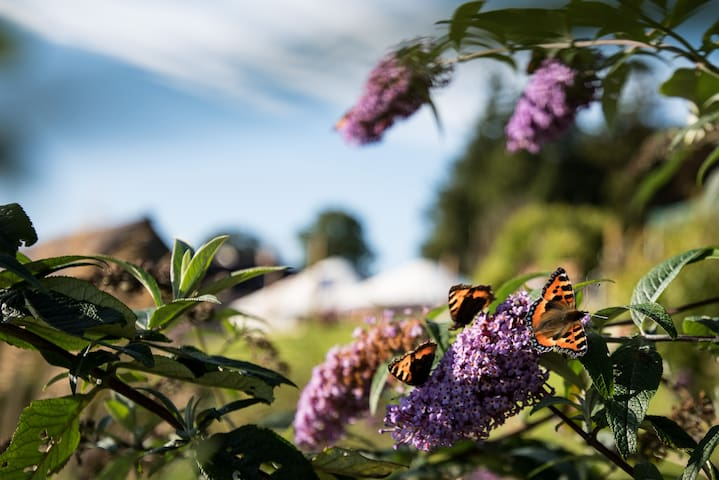 A hive of nature on the farm