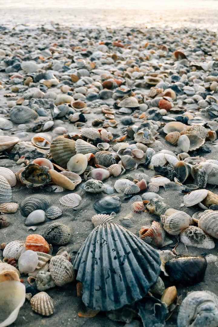 A myriad of shells