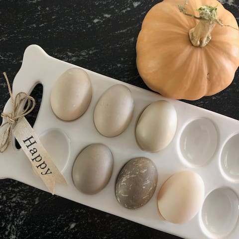 Our heritage breed ducks lay eggs of all colors,  from vanilla to dark gray to black. Crazy!