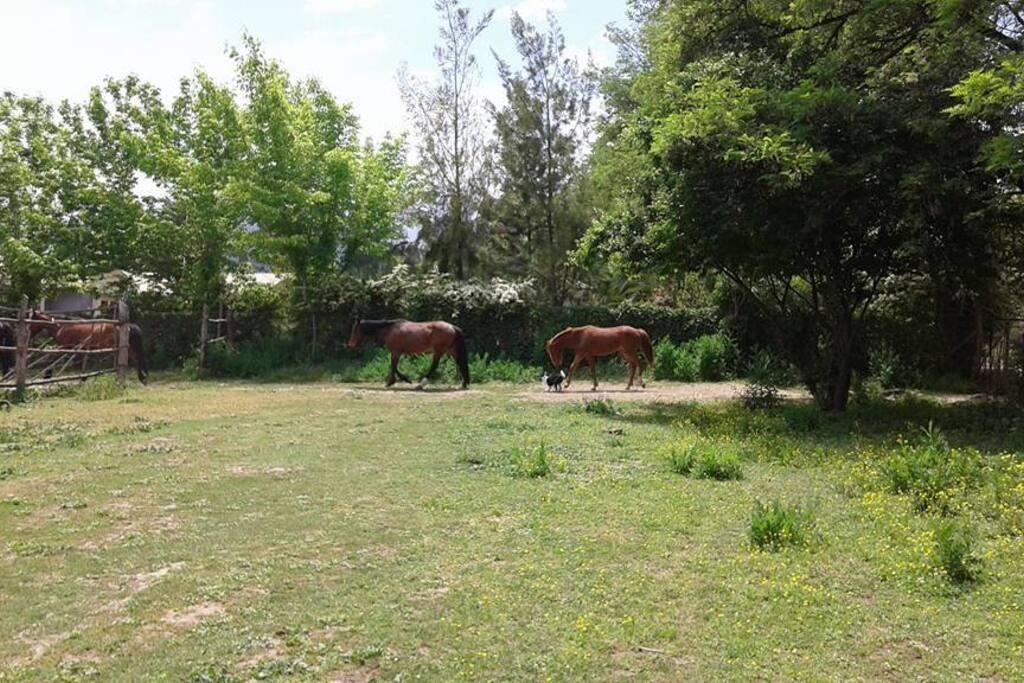 Gran espacio de esparcimiento compartido con los caballos de la propiedad
