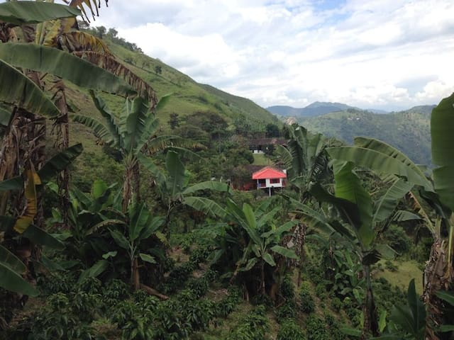 Finca Corozal: unique experience on a coffee farm
