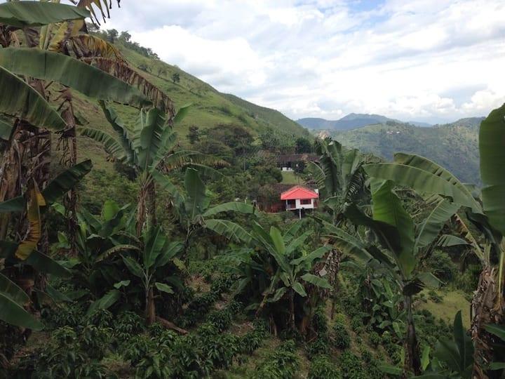 Finca Corozal: unique experience on a coffee farm