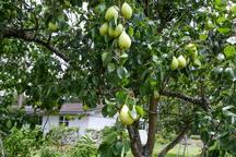 Cardinal's Nest of Magnolia Tiny House Village