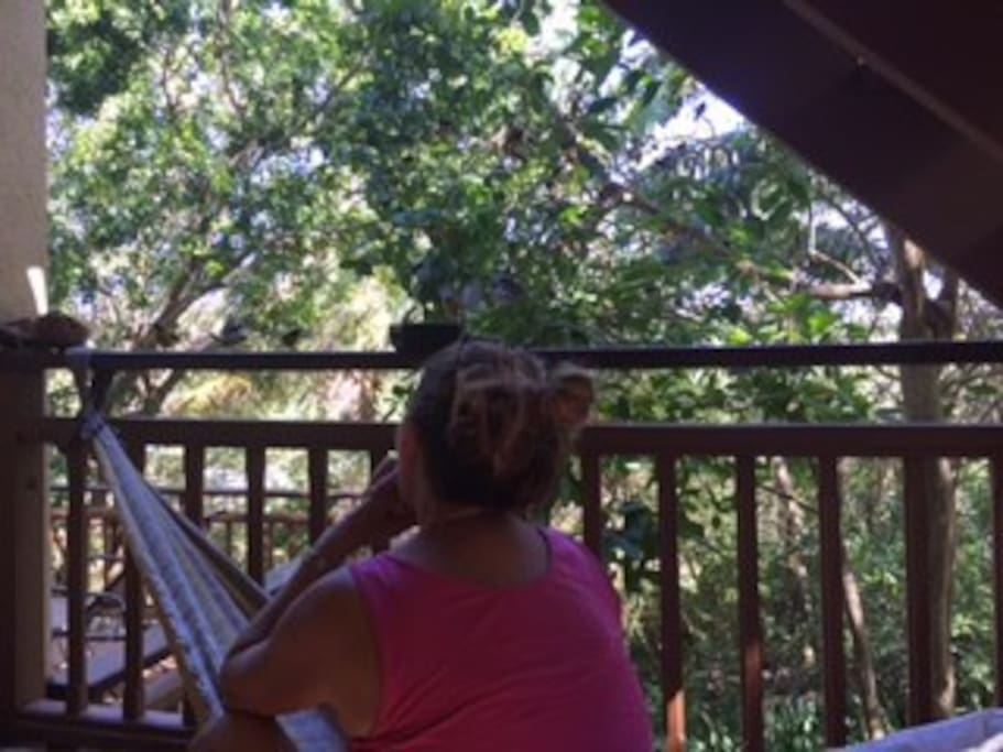 Hammock on the porch watching the bananaquit birds