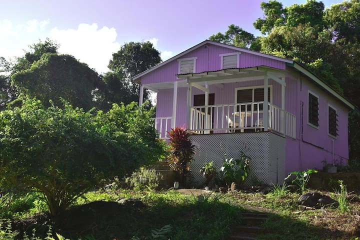 El yunque rainforest, coconut cottage (6)