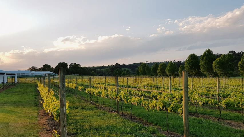 The vineyards you can stroll through that are around the farm