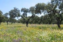 Caminhadas nos campos na primavera, é lindo!