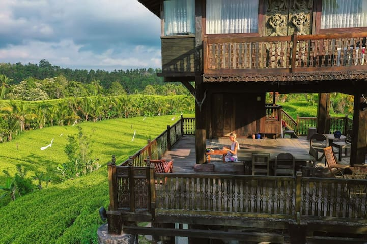 Rice Field View Bungalow