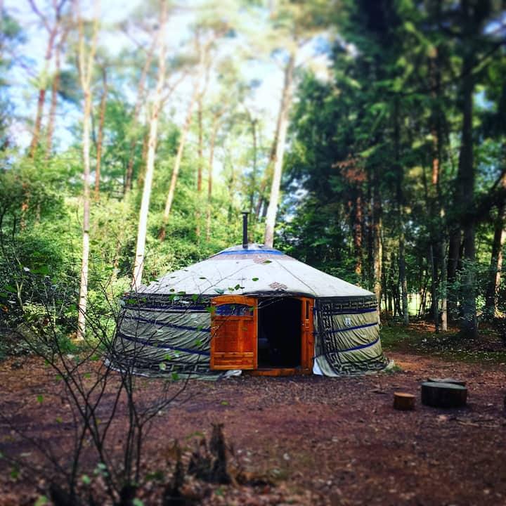 OER Ger / yurt op Natuur Kampeerterrein in het bos