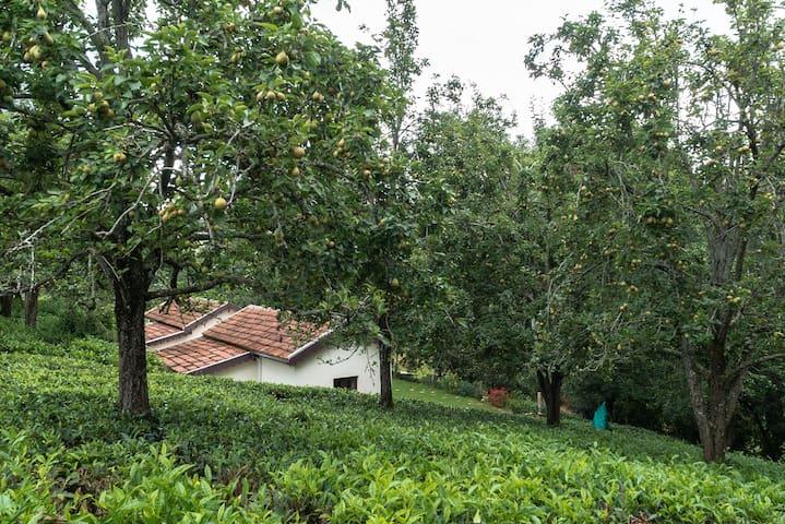 Plantation Stay in Kotagiri W/ baking experience